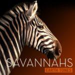 Earth Tones Savannahs