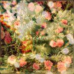 فول آلبوم داوویل (Da Voile)