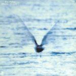 فول آلبوم ریو فوکویی (Ryo Fukui)